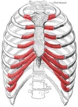 costochondritis[1].jpg